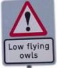 flaviomatani: (lowflyingowls)