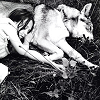 mortalcity: Girl and a wolf, sleeping together in the grass. (wolves | pack animals)