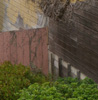 raingirl: (backyard, ivy, sf, wall) (Default)