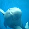 aquaticrush: ([virus] porpoise)