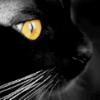 lenija: (black cat)