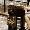 """sofiaviolet: woman seated at a typewriter, outside, with a sign that says """"poems"""" (poems)"""