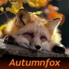 autumnfox: red fox resting on a log, surrounded by red and gold autumn leaves (Autumnfox (default))