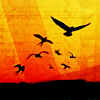 spatz: drawing of birds in flight, silhouetted against an orange-gold sunset (sunset birds)