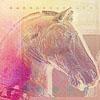sienamystic: (horse)