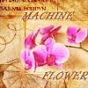 sienamystic: (flowermachine)