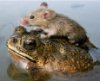 blatherskite: (Frog, Mouse, Help!)