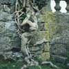 neile: (ivy, scotland)