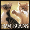 justira: (kitten brains)