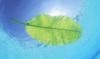 sabrinamari: (Leaf on the wave)