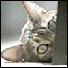 darthneko: hiding cat ([personal] i iz not here. try back latr.)