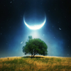 lilrinnieb: (moon and tree)