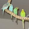flyingfluff: (budgie flock)