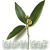 ext_2180: laurel leaf (candle & username)