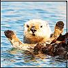 artisan447: cheering beaver (woohoo)