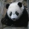radhardened: (panda)