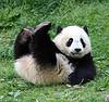 radhardened: (panda butterstick)