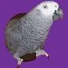greyfeathers: (Default)