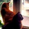 zillah975: My cats Buddy, an orange tabby, and Boomer, a black fluffball, sitting in the window. (Cats are awesome 2)