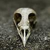 jane: (SP - Samhain - Bird Skull)