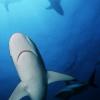 sharktank: (pic#3288284)