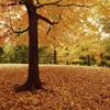 alt_moderator: (fall)
