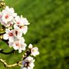 alt_moderator: (spring)