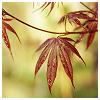 eirikr: (leaves)