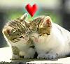 tatteredfaeriequeene: love kitties, sharing a secret (lovekitties)