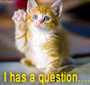 tatteredfaeriequeene: I has a question, says the kitteh (I has a question...)