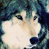 werewolfoflondon: (Moony)