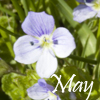 biggelois: (May)