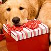 madeleone: (santa dog)