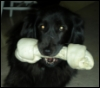 valkyrie_kitten: (Bone, Willow)