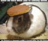 arin_rowan: Bunny pancake (Default)
