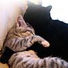 killabeez: (kitties snuggle)