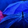 fallingtowers: dark blue umbrellas in the rain  (Mood: Even Fangirls Get the Blues)