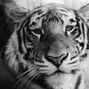 bofus: (animal. tiger buddy)