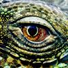 lenija: (Lizard Eye w/ POWER)