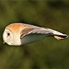 helenic: (owlfish)