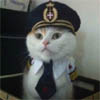 sugar_cookie: (Captain Kitteh!)