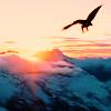 lavendertook: (gwaihir over misty mountains)