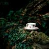 lavendertook: (tea in the wild)