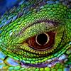 lavendertook: (green dragon eye)