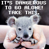lavendertook: (baby koala protection)