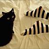 bluehour: stock - black cat & girl's feet in striped stockings (cat & stockings)