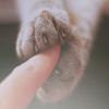 lavendertook: (paws holding finger)