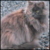 lavendertook: (brigit)