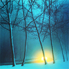 paian: winter trees, bright yellow glow (maybe sun, maybe something else) beyond (trees by sacredmonster)
