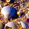 lavendertook: (beachcombing)